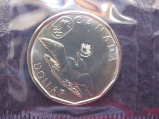 2014 $1 Lucky Loonie photo