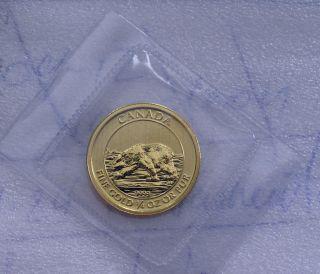 2013 Canada 1/4 Oz.  9999 Gold $10 Dollars Coin - Polar Bear Bu Special,  Rare photo