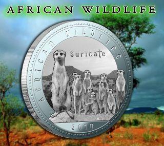 2014 Zambia African Wildlife Suricate 1000 Kwacha Silver 925 photo