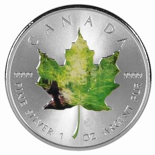 2014 Canada Maple Leaf 1 Oz 9999 Silver Coin Forest Colorized Maple Leaf Rare photo