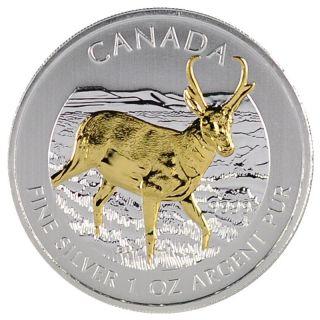 2013 1 Oz Ounce Silver Coin Pronghorn Antelope 24k Gold Gilded.  9999 Rare Rcm photo