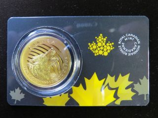 2014 1 Oz Howling Wolf Gold Maple Leaf Canada Pure 99999 Coin $200 photo