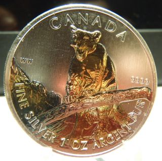 2012 Canadian Cougar,  Wildlife Series Bu Royal,  24k Gold Enhanced photo