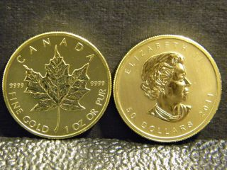 2011canadian Maple Leaf 1oz Gold Bullion Coin.  999.  9 Fine Bu. photo
