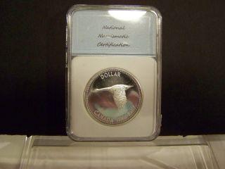 1967 Gorgeous Silver Canadian Dollar Coin - Diving Goose - Dcameo - Rare photo