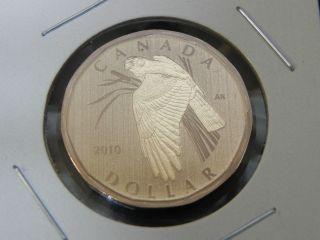 2010 Specimen Unc Canadian Canada Northern Harrier Loonie One $1 Dollar photo