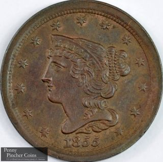 1855 Braided Hair Half - Cent Borderline Uncirculated Chocolate Brown Type Copper photo
