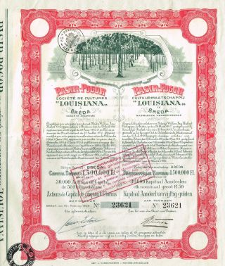 Indonesia Pasir Pogor Rubber Plantations Stock Certificate photo