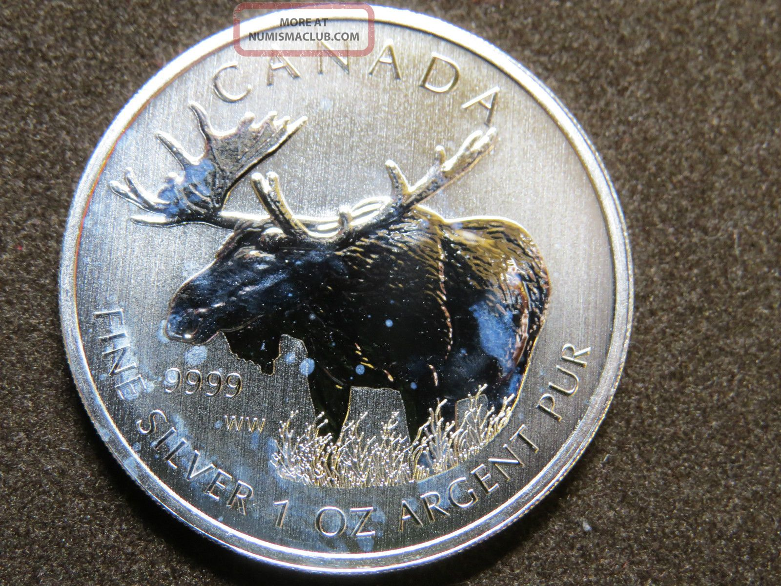 2012 1 Oz Moose Silver Maple Leaf Coin 5 Canadian