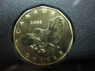 2006 Canada Specimen Snowy Owl Loonie ($1) Rare photo