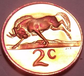 Rare Proof South Africa 1980 2 Cents Only 5,  000 Ever Minted Black Wildebeest F/s photo