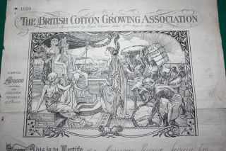 Uk The British Cotton Growing Association 1905 20 Shares Certificat photo