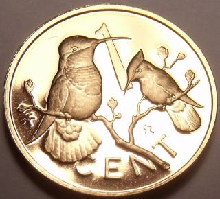 Rare Cameo Proof British Virgin Islands 1979 Cent Hummingbird 5,  304 Minted Fr/sh photo