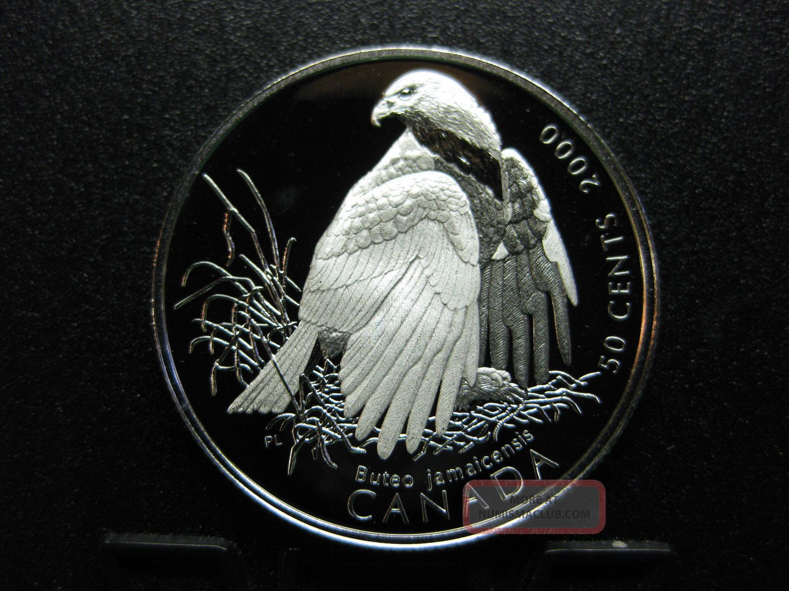 2000 Canada S Birds Of Prey Canada Silver 50 Cent Coin Red Tailed Hawk