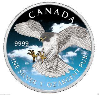 1 Oz Birds Of Prey 2014 - Peregrine Falcon Color Blue Canada Series.  9999 photo