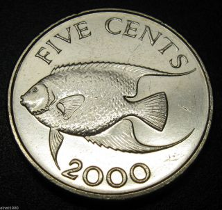 Bermuda 5 Cents Coin 2000 Km 108 Fish (a1) photo