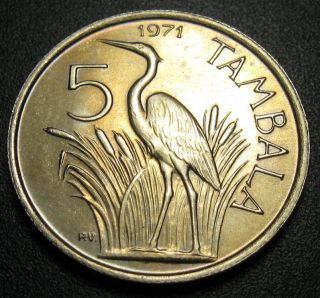 Malawi 5 Tambala Coin 1971 Km 9.  1 Purple Heron Bird Au, photo