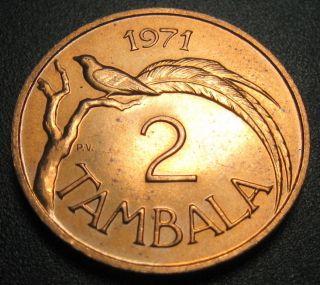 Malawi 2 Tambala Coin 1971 Km 8.  1 Paradise Whydah Bird Au, photo