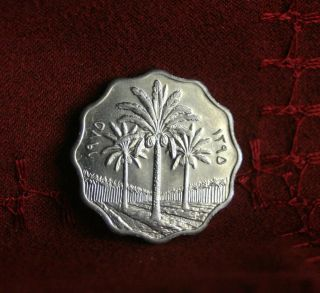 Iraq 10 Fils 1975 Unc World Coin Km126a Palm Trees Middle East photo