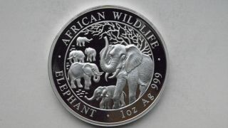 2008 Somalia African Wildlife Elephants 100 Shillings Silver Bu Coin photo