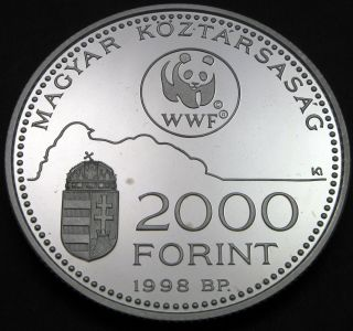 Hungary 2000 Forint 1998 Proof - Silver - World Wildlife Fund - 607 猫 photo