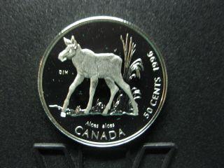 1996 Little Wild Ones - Canada Silver 50 Cent Coin - Moose Calf photo