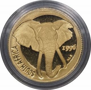 1996 South Africa 1 / 10 Oz Gold Natura Elephant In Capsule W/ photo