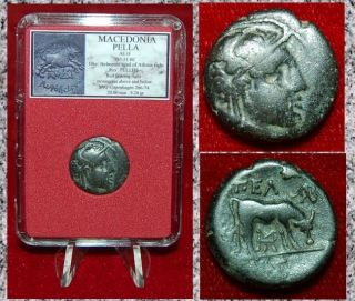 Ancient Greek Coin Macedonia Pella Helmeted Athena And Bull On Reverse photo