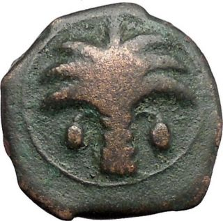 Carthage In Zeugitana 300bc Rare Ancient Greek Coin Horse Palm Tree I48141 photo