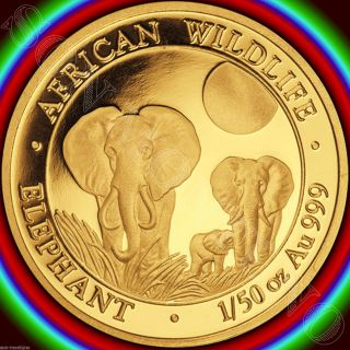 2014 Somalia Gold Elephant 1/50 Oz 24k Proof Coin In Capsule African Wildlife photo