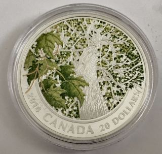 2014 $20 Fine Silver Canada Maple Canopy Spring Splendor,  Box And photo