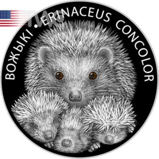 Belarus 2011 20 Rubles Hedgehogs Proof Silver Coin photo