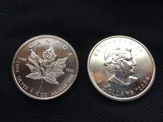 2008 Canadian Maple Leaf 1 Oz 5 Dollar Silver Coin 99.  99 Bu photo