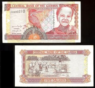Gambia P - 20a Central Bank Of The Gambia 5 Dalasis Ns/nd (2001) Vf/ef photo