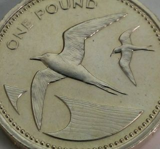 Saint Helena & Ascension 1 Pound 1984.  Km 6.  One Dollar Coin.  Sooty Terns Birds. photo